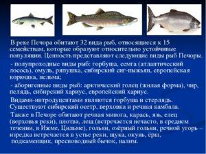 Все рыбы печоры