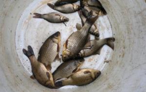 Ловля карася на небольших озерах