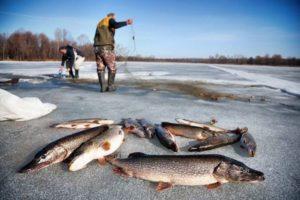 Промысел рыбы сетями зимой видео