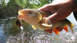 На что лучше ловить рыбу в реке
