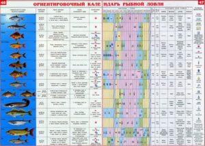 Прогноз клева рыбы в белозерском районе