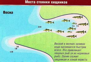 Как определить где стоит рыба