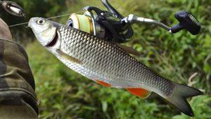 Разрешенные снасти для ловли рыбы