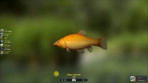Как поймать линя трофейная рыбалка