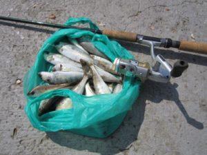 Снасти для ловли морского окуня на черном море
