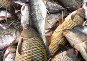 Рыба частиковых пород это