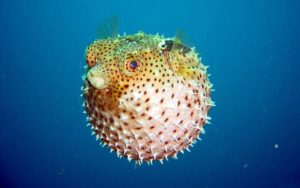 Шар рыба картинки