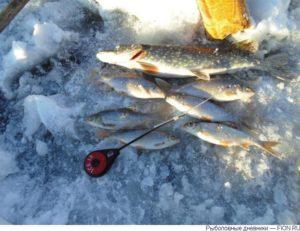 Рыбалка на иркутском водохранилище летом