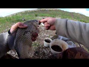 Ловля леща на ириклинском водохранилище