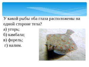У какой рыбы глаза на одной стороне