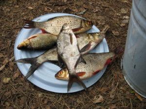 Где ловить рыбу на озере селигер