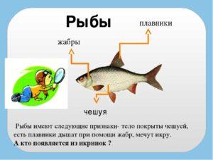 Рыбы признаки рыб