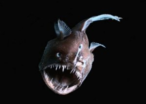 Глубоководная рыба 6