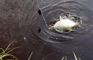 Ловля леща весной на реке