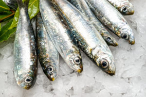 Сардина фото рыбы