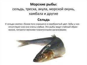 Сельдь это морская рыба
