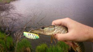 Рыбалка на щуку ранней весной видео на воблеры