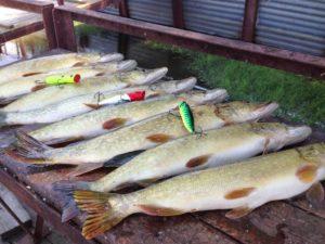 Ловля рыбы в астрахани на раскатах