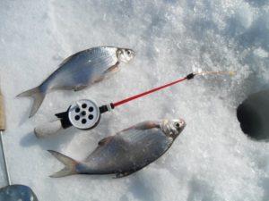 Ловля леща зимой на подледники
