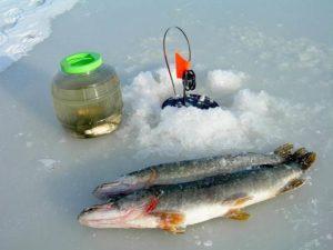 Ловля на живца зимой на жерлицы видео