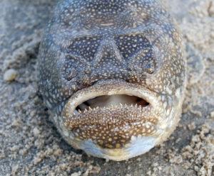 Рыбы хладнокровные или