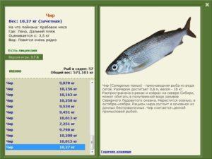 Крупная рыба из сигов