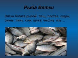 Какие рыбы в реке вятке