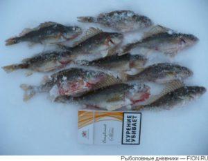 Конаково отчеты о рыбалке 2016