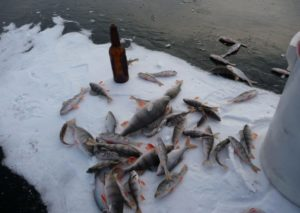 Река оскол рыбалка старый оскол
