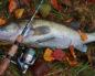 Активность рыбы в октябре